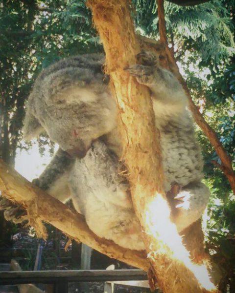昼寝と仮眠の効果