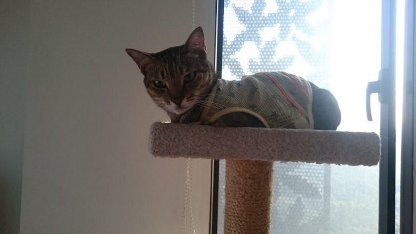 パジャマを着ている猫