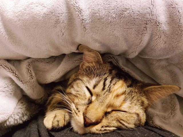 冬の睡眠対策